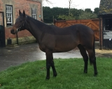 LORD ILSLEY RACING - 2016 PREVIEW - 2015 saw Needless Shouting record a debut win over hurdles whilst Ettie Hart, although late to blossom ran an excellent second on her only outing, whilst the admirable Gandvik had more than a few issues but never shirked a challenge. No matter, 2016 promises much with a new yearling colt by Sayif joining the ranks.
